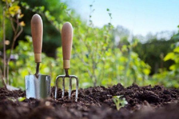 Какие работы выполнять в саду