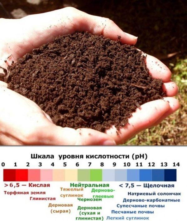 Выбор грунта для посадки растения