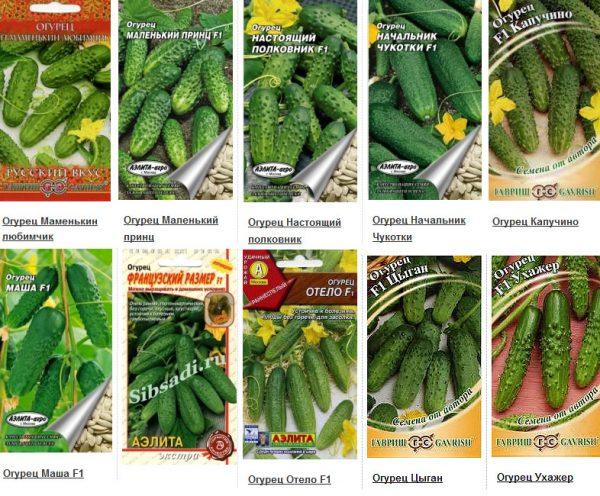 Выбор семян огурцов для посева