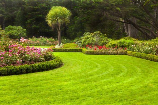 В июне можно высадить газонную траву