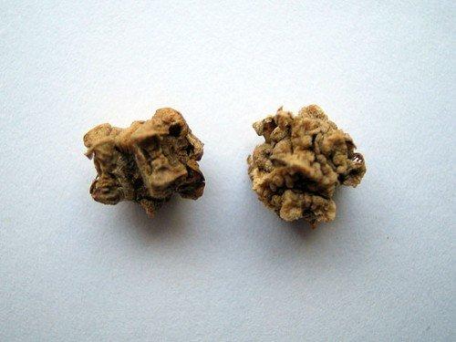 Семена свеклы мелкие и морщинистые