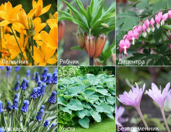 Выбор цветов для кладбища