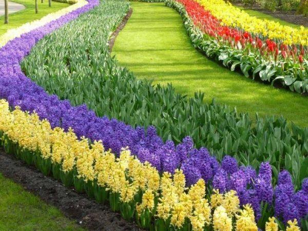 Рабатка с весенними цветами