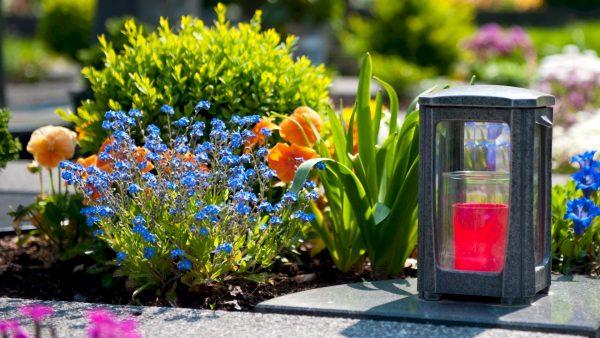 Какие цветы можно посадить на кладбище