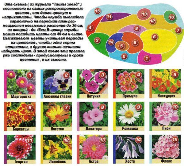Какие цветы выбрать для дачи