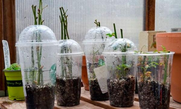 Проращивание в емкостях