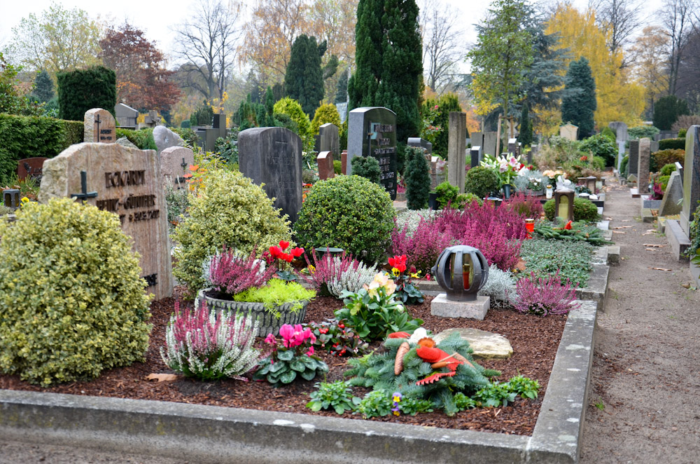 Какие цветы и растения лучше посадить на могилу на кладбище, чтобы они цвели весной, летом и осенью