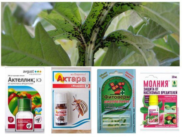 Химические препараты для борьбы с тлей