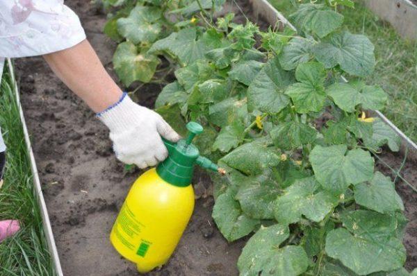 Внесение азотистых удобрений
