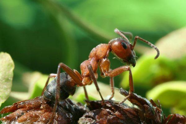 Как избавится от муравьев на дачном участке
