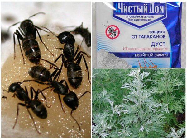 Народные средства в борьбе с муравьями