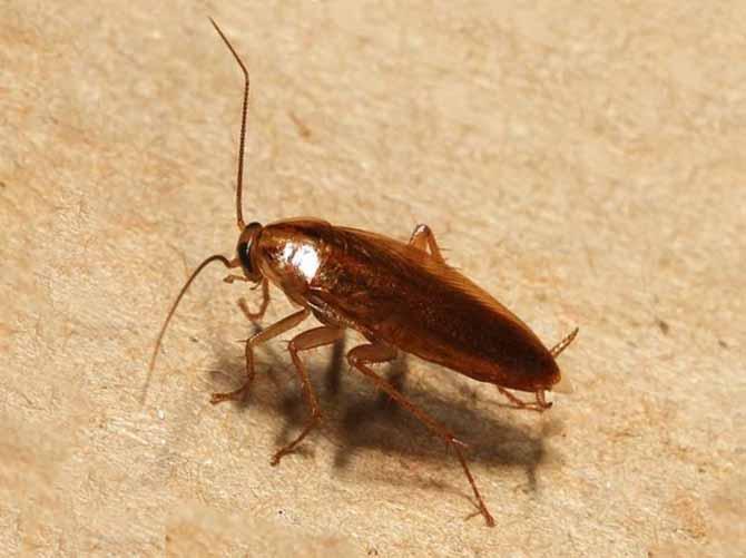 Как избавиться от тараканов в телевизоре