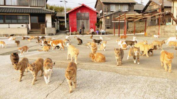 Кошачий рай в Японии