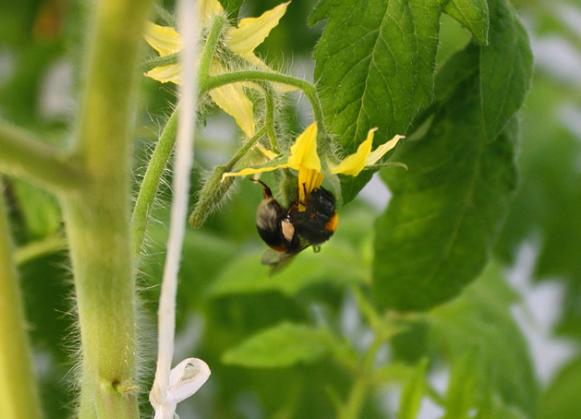 Естественное опыление растений