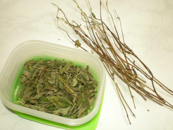 Как правильно хранить высушенные листья растения
