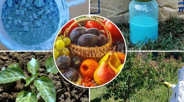 Бордосская жидкось применяется для ухода за растениями