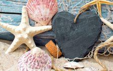 seashells-starfish-net-wood-6558