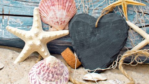 seashells-starfish-net-wood-6558