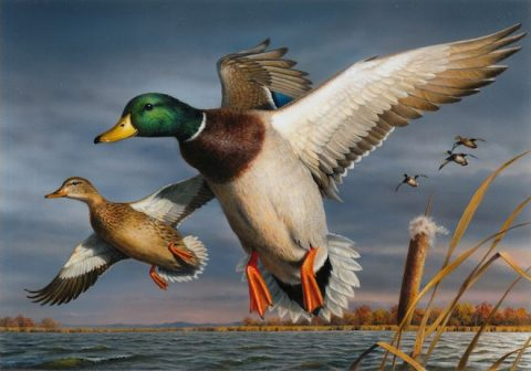 2018-Duck-Stamp-660x462