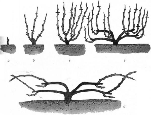 Веерная схема обрезки