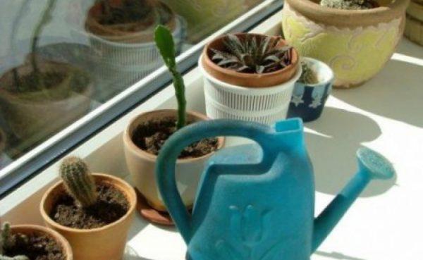Как проводить полив растений