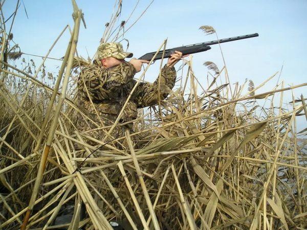 Открытие охоты в Новосибирской области