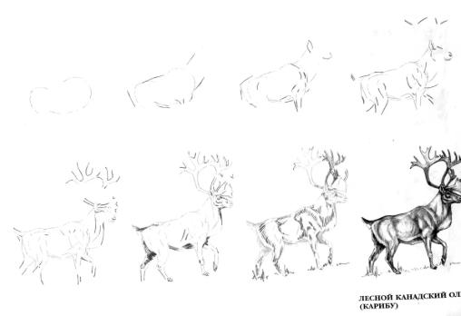 Как нарисовать оленя на Новый год 2019: поэтапно с фото, легко и красиво