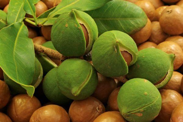 Орех макадамии содержит антиоксиданты