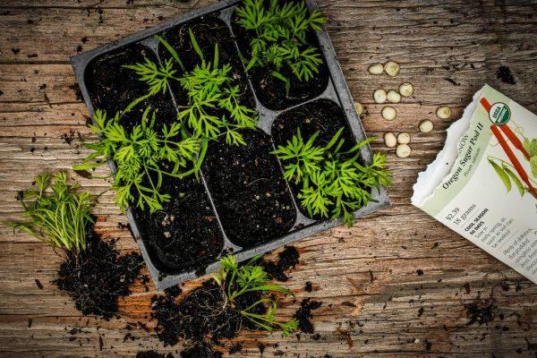 Что нужно делать садоводу в марте 2019