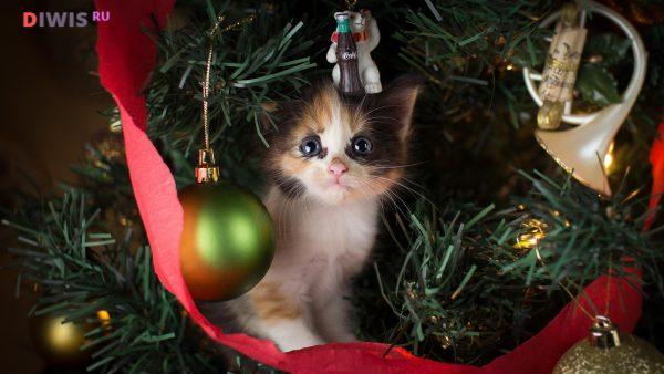 Маленький котенок под елкой