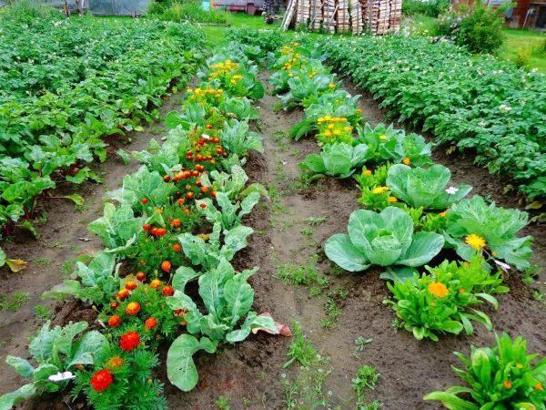 Что сажать в марте на рассаду (овощи, цветы)
