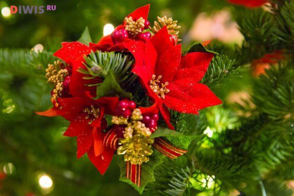 Рождественские растения