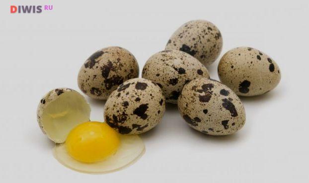Перепелиные яйца - не только источник белка, витаминов и микроэлементов, но и основа для домашнего майонеза в блендере