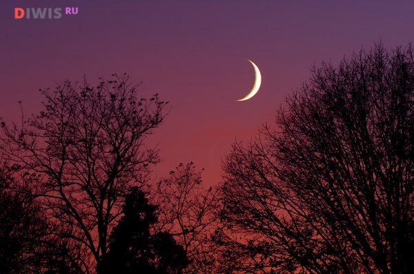 Начало Растущей Луны в марте 2019 г,приходится на 7 марта, а конец на 20 марта