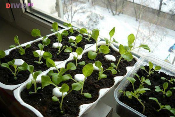 Какая почва для посадки семян петунии нужна