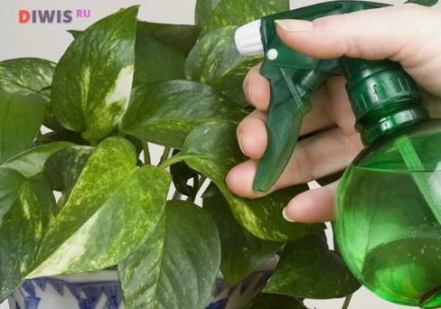 Как избавиться от мошки в комнатных цветах