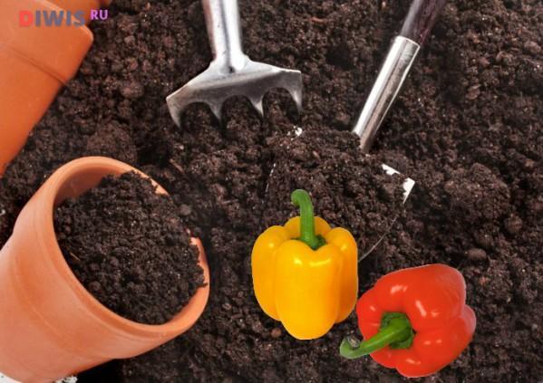 Сроки посадки перца в Среднем Поволжье