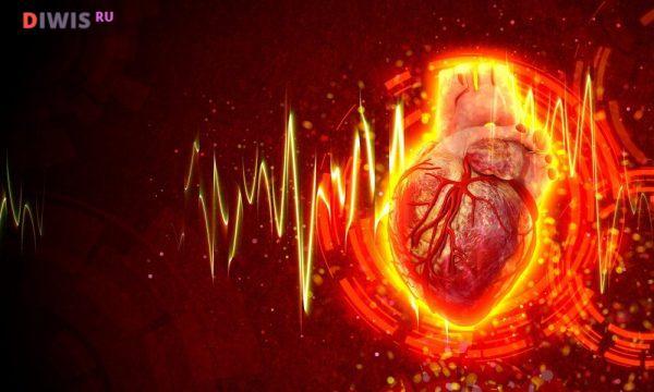 Нормальная деятельность сердца