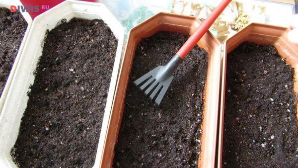 Когда сажать рассаду в теплицу и открытый грунт