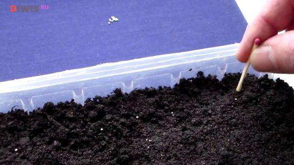 Как подготовить семяна петунии к посеву самостоятельно на рассаду