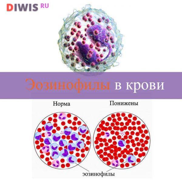 Эозинофилы повышены у взрослого