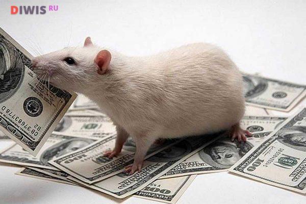 Основные приметы на Новый 2020 год Крысы